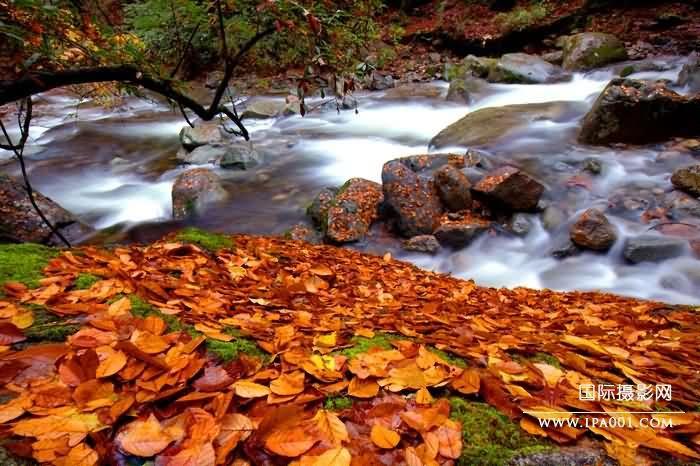 深秋Late autumn.jpg