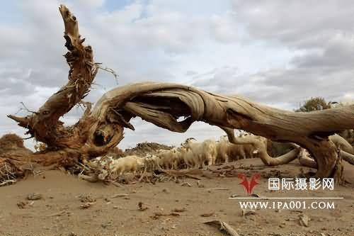 沙漠之龙.jpg